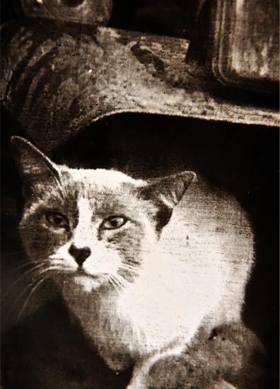 El gato, Transferencia al carbón sobre papel plata gelatina. © Juan Carlos Basabe