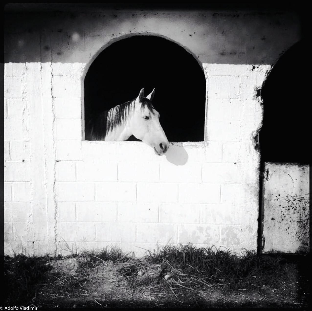 © Adolfo Vladimir