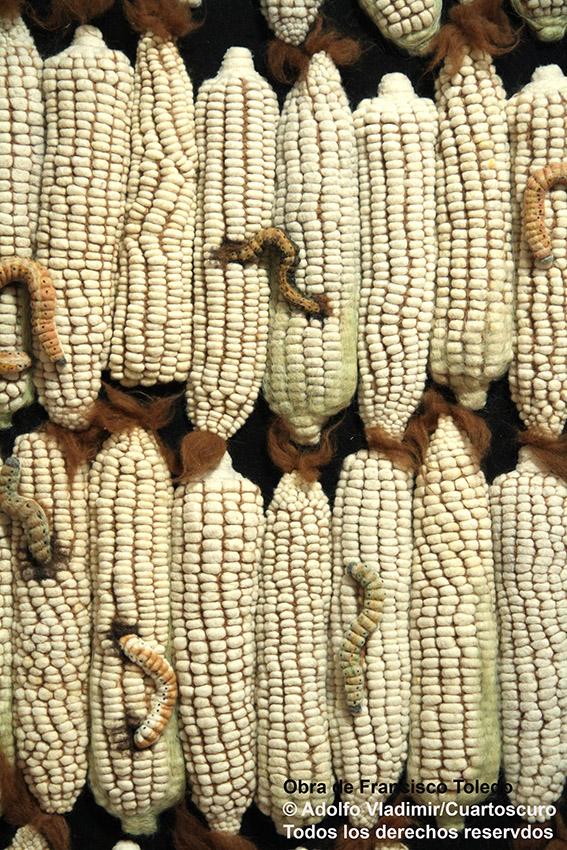 """De su exposición """"Sin maíz no hay Toledo"""", una crítica a la siembra de maíz transgénico, durante la edición del XLIII Festival Internacional. Guanajuato, Guanajuato. Octubre 8, 2015. Foto de obra: © Adolfo Vladimir/Cuartoscuro"""