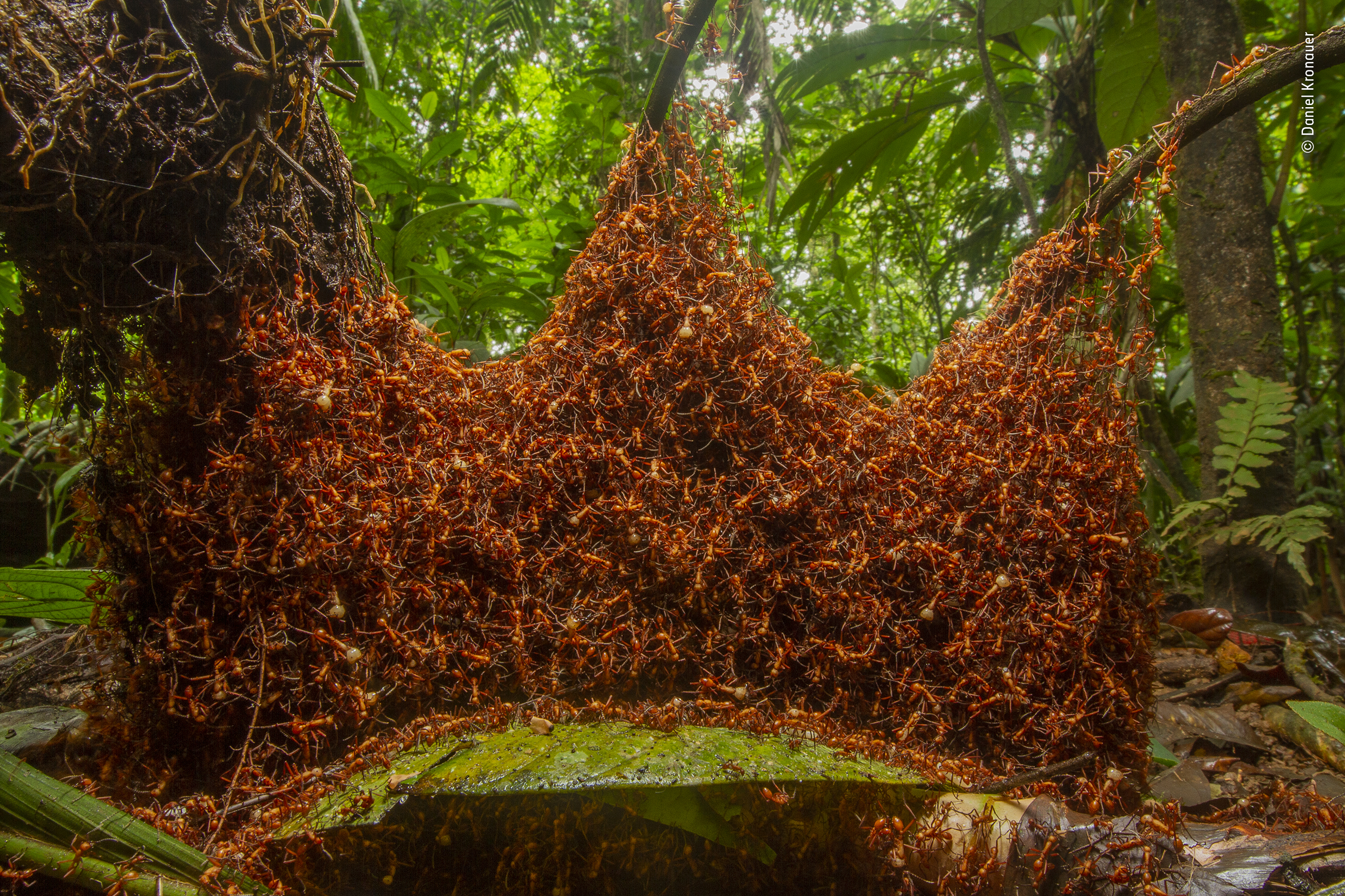 Ant Cathedral