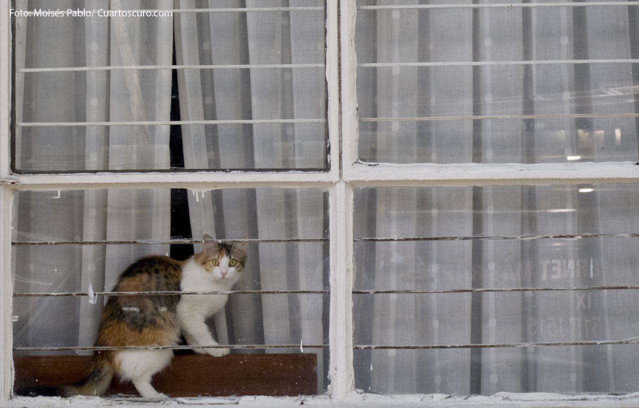 MÉXICO, D.F., 08JULIO2014.- Un gato se asoma afuera de la ventana de una casa en la actualidad muchos prefieren la compañía de los felinos. La recomendación es mejor la adopción de perros o gatos en lugar de comprarlos, además de esterilizarlos para