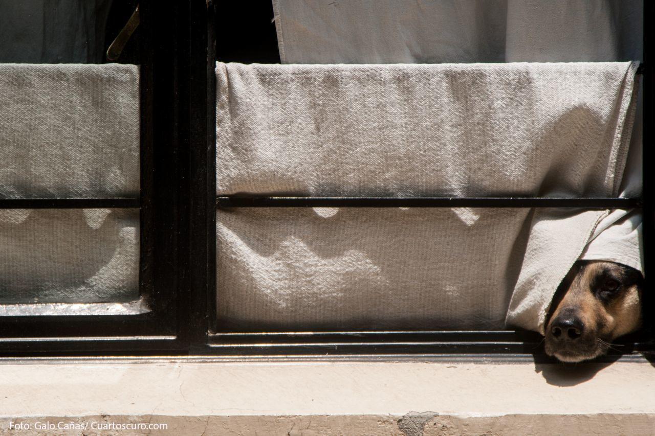CIUDAD DE MÉXICO, 07ABRIL2019.- En una soleada tarde, un perro se asoma por la ventana de una casa de la colonia Roma. FOTO: GALO CAÑAS /CUARTOSCURO.COM