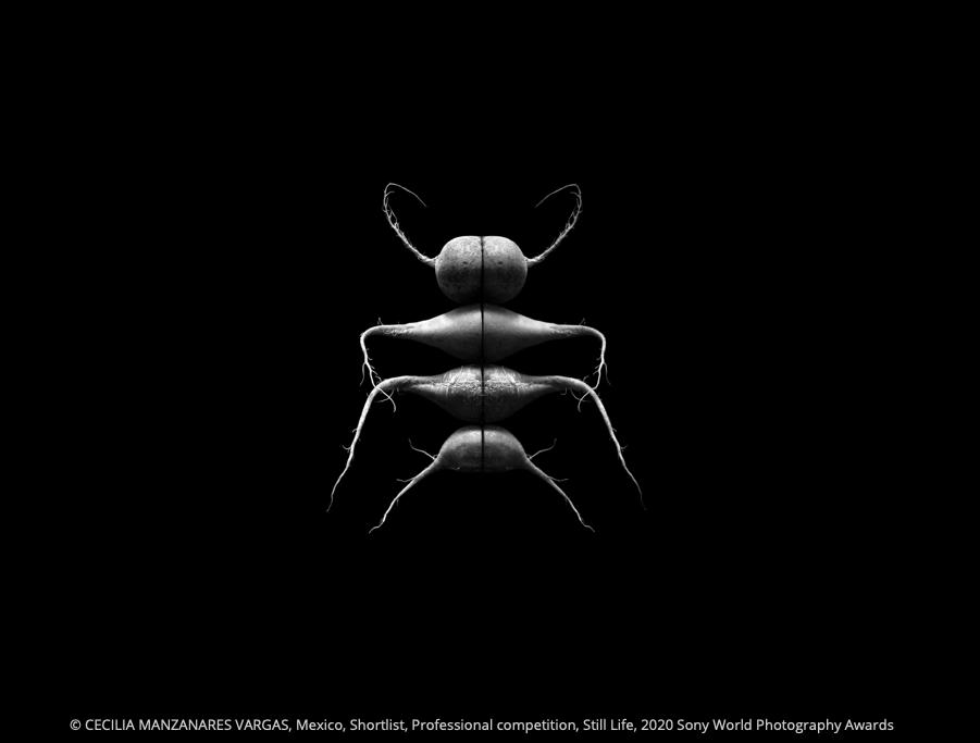 De la serie Specimen 07 © Cecilia Manzanares Vargas