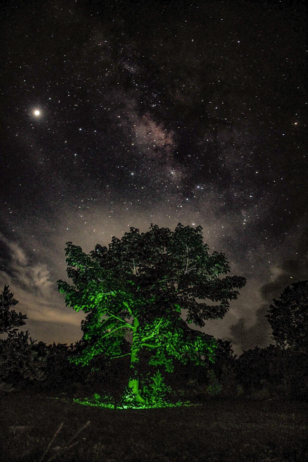 Fotografía de la Vía Láctea visibles desde la ruta de los Cenotes en Quintana Roo.